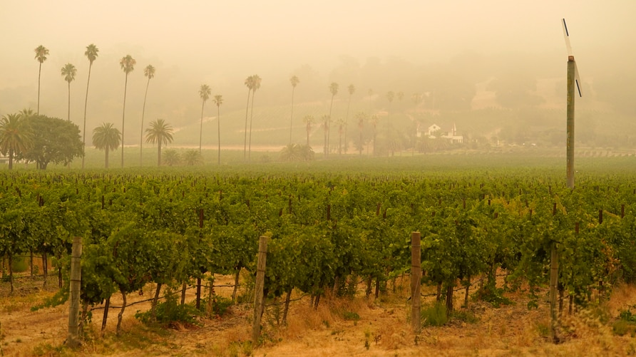 Smoke and haze from wildfires hovers over a vineyard Thursday morning, Sept. 10, 2020, in Sonoma, Calif. (AP Photo/Eric Risberg)