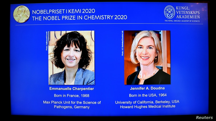 Pictures of Emmanuelle Charpentier and Jennifer A. Doudna, winners of the 2020 Nobel Prize in Chemistry, are displayed on a…