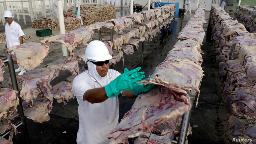 FILE PHOTO: A worker spreads salted meat which will be dried and then packed at a plant of JBS S.A, the world's largest beef…