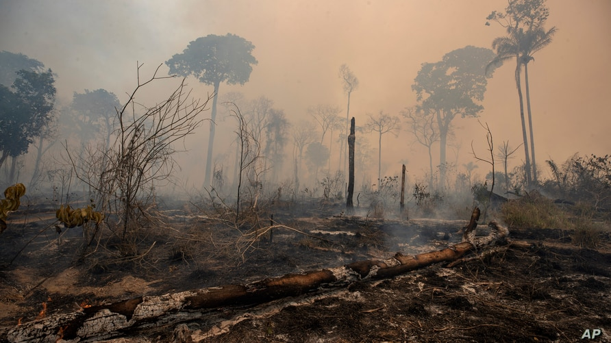 Fire consumes land deforested by cattle farmers near Novo Progresso, Para state, Brazil, Sunday, Aug. 23, 2020. An order…