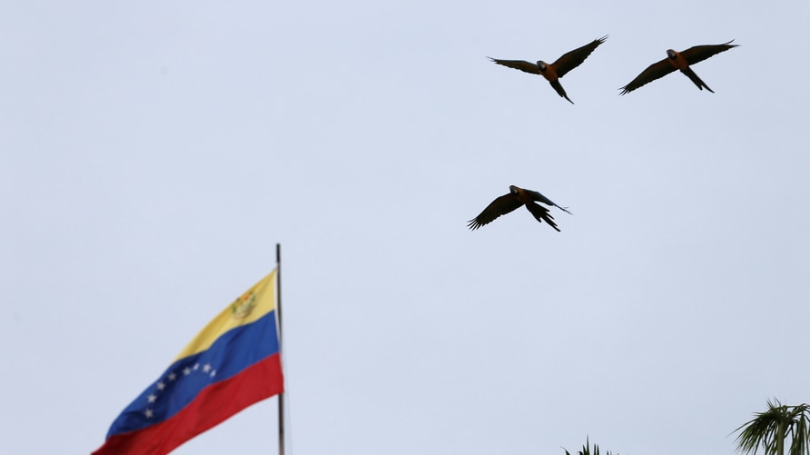 Birds fly next to a Venezuelan flag in Caracas, Venezuela