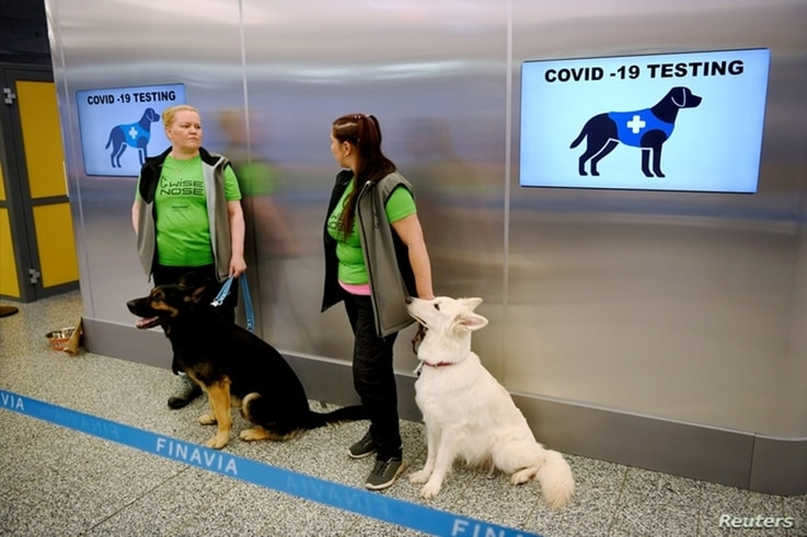 Sniffer dogs Valo, left, and E.T., who are trained to detect the coronavirus disease from the arriving passengers' samples, sit next to their trainers at Helsinki Airport in Vantaa, Finland, Sept. 22, 2020.